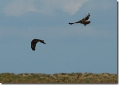 Cley Marshes D300s X14  12-05-2012 13-47-038