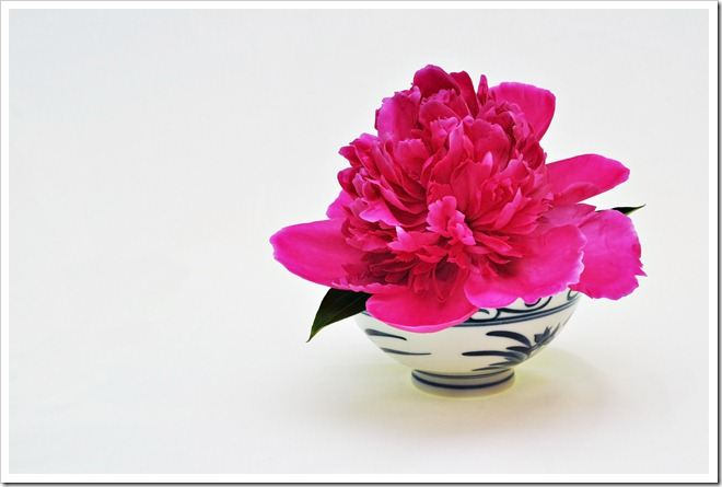 peony in bowl