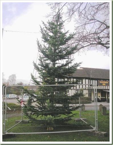 Bilbrook Christmas Tree 4