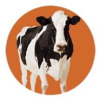 SAC-GIFT05-cow-circle