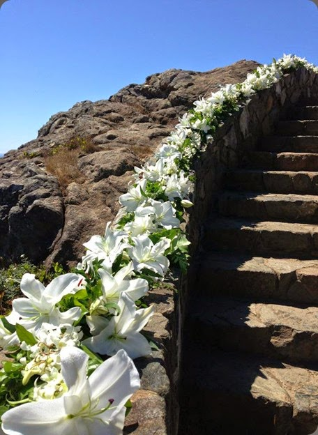 stairs 1174742_10151873264700152_830894167_n flora organica designsn