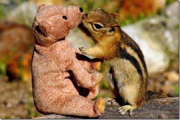 funny-animals-cute-13