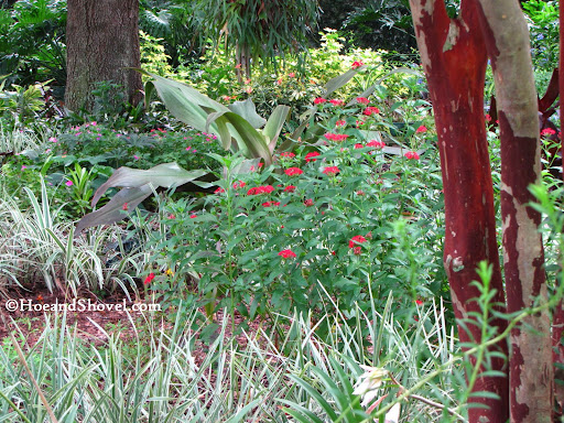 A view from the wildflower garden through the butterfly garden and into the tropical pathways.