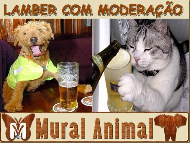 pets_beer