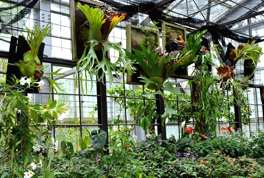 Glória Ishizaka -   Kyoto Botanical Garden 2012 - 12
