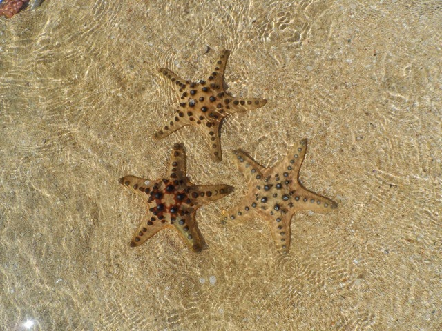 burot_beach_batangas_trip_angelomesa_2014 (51)