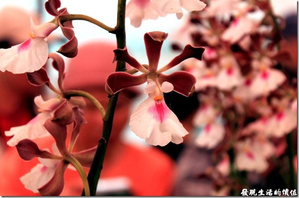 2012台南蘭花展06