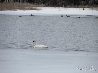 Fish Hook River April 8