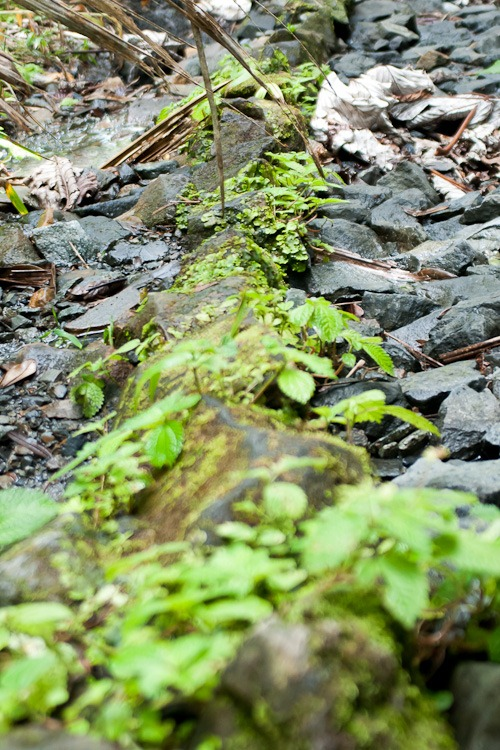El Yunque Rainforest blog-31