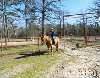 horseback ride 08