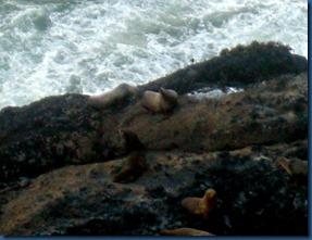 Sea lions (5)