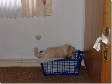 2005_10 Max verbuddelt Knochen (1)
