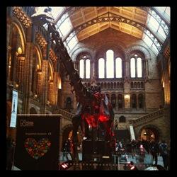Diplodocus Natural History Museum