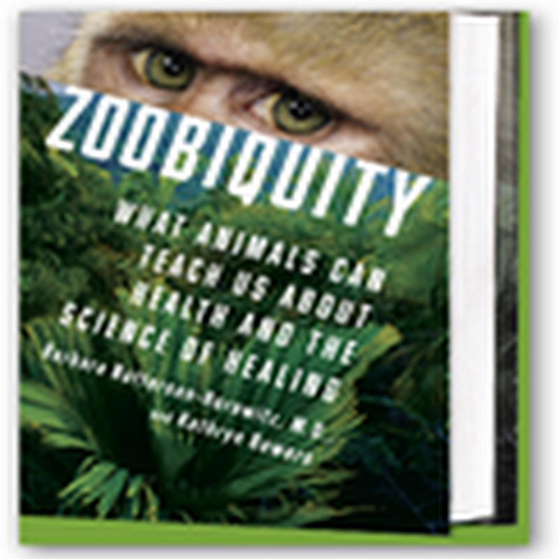 "Zoobiquity–Animals Have Many of the Same Health Problems As Do Humans, Obese Dragonflies, Koalas With Chlamydia & They Get ""High"" in the Wild"