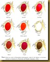 Drosophila_eye_colors