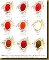 Drosophila_eye_colors
