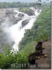 SueReno_Shivanasamudra Falls 11
