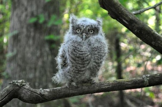 Owl12jpg.img_assist_custom-600x398