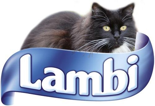 lambi-molly