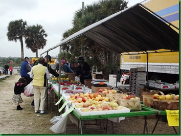 Farmers market and tree at Flagler 016