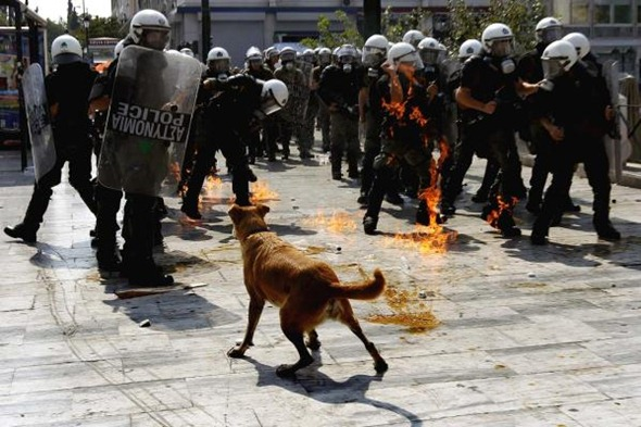 Sausage the dog, who was frequently spotted in the thick of the Greece riots. 04