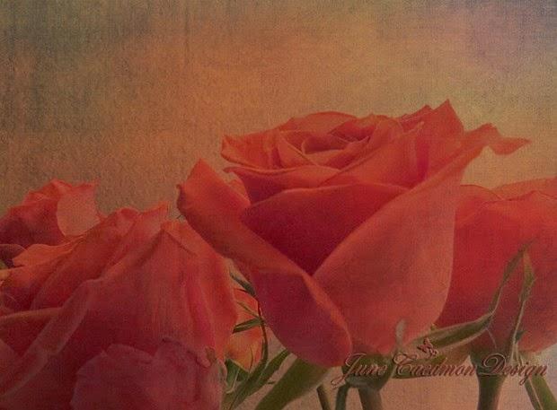 Roses_kk_pumpkingrunge