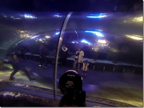 aquarium (6)