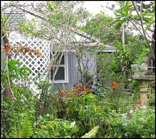 06-08 jungle5