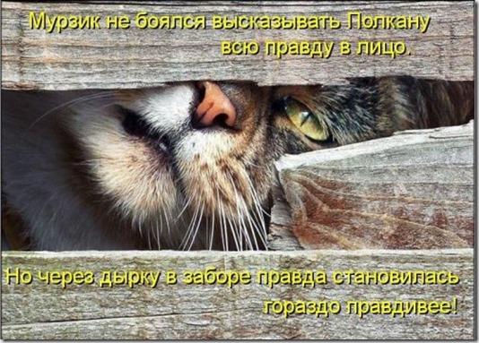 1353684257_shikarnye-kotomatricy-0