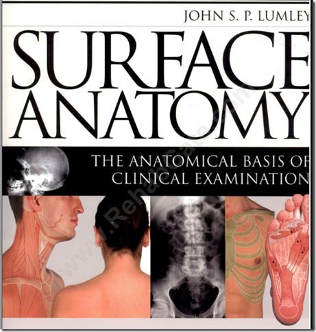 suface-anatomy