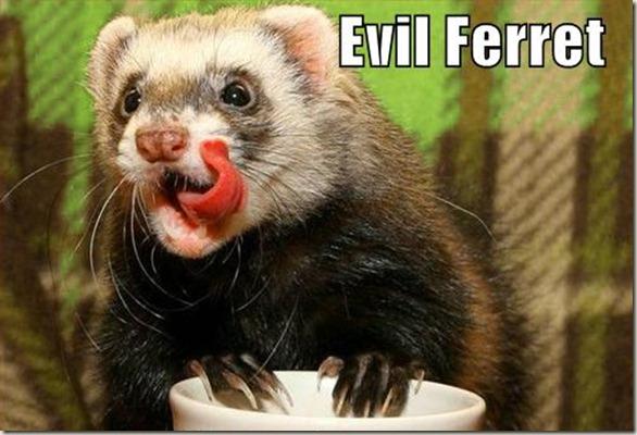 Evil Ferret