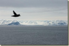 Longyearbyen glaciers and bird (Small)