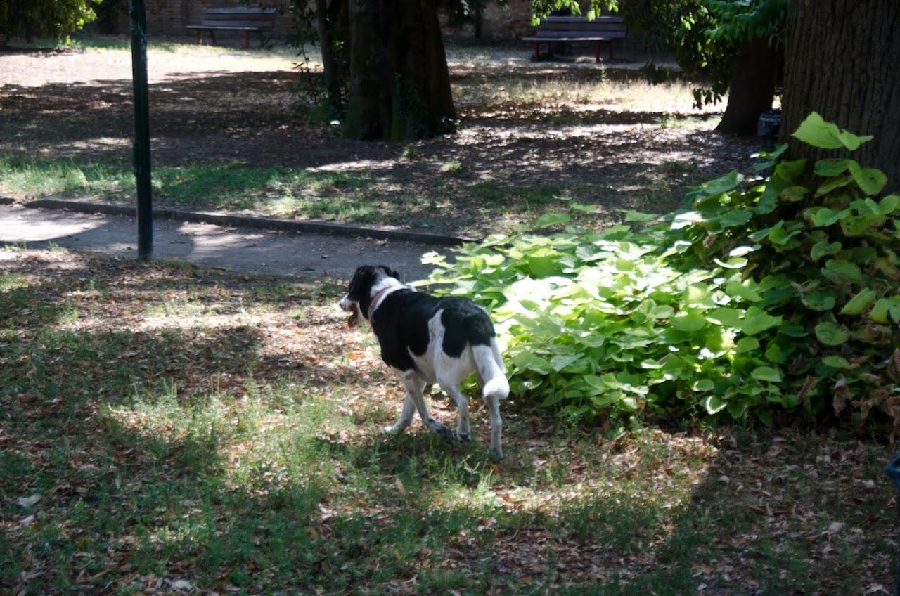Abby in a Venice park