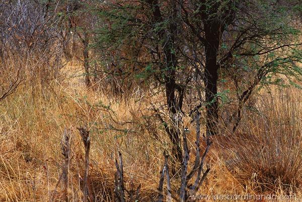 camuflagem-invisivel-animal-camouflage-photography-art-wolfe-desbaratinando (5)