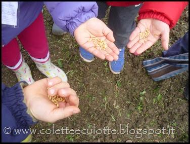 I bambini delle classi 1° della Scuola Primaria di Padulle piantano il grano! (19)