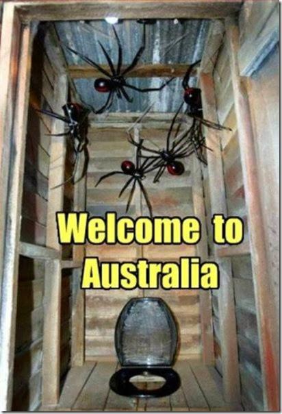 australia-scary-spiders-022
