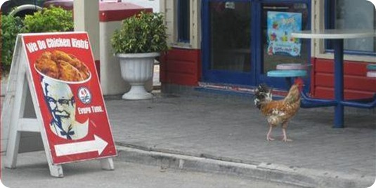 valiente pollo