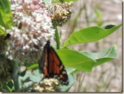 422.Butterfly