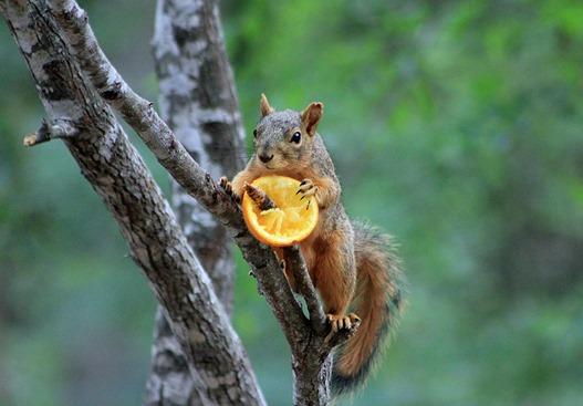 NBC Squirrel 2013