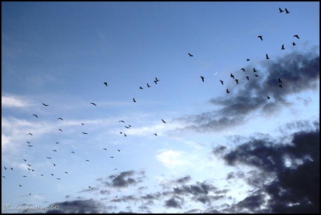 Birds Moon