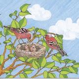 pájaros 004.jpg