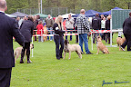 20100513-Bullmastiff-Clubmatch_30880.jpg