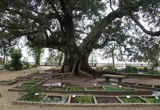 Glória Ishizaka - Jardim Botânico Ajuda - 62