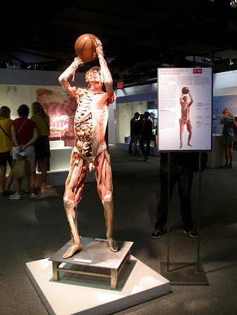 Galleries of New York: Real bodies