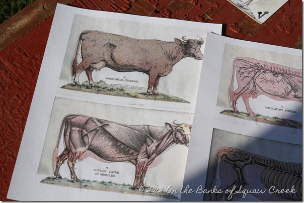 antique farm animal images