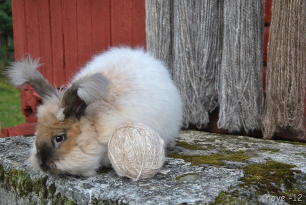 kaninene 048