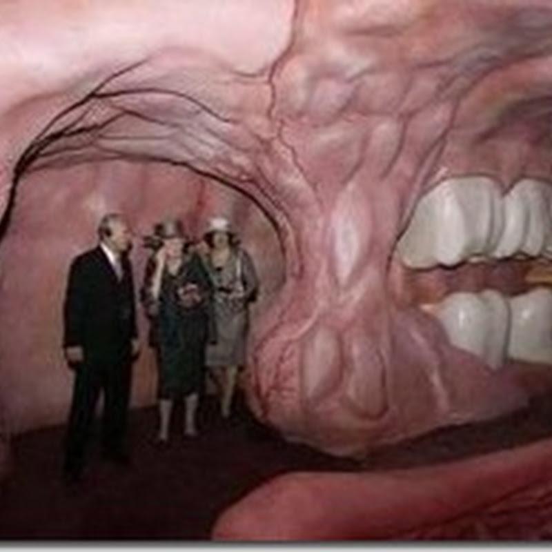 بالفيديو: متحف: رحلة داخل جسم الانسان