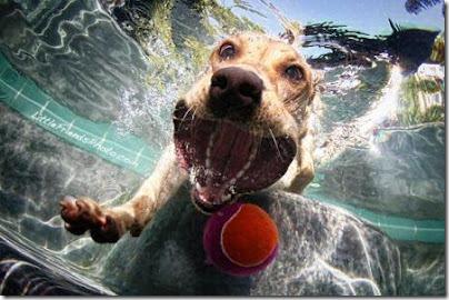 perros bajo el agua (7)