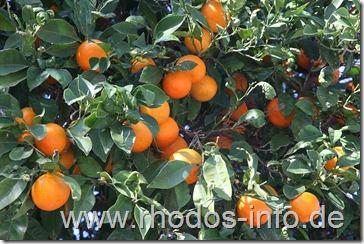 mandarinen02