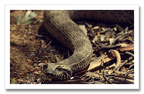 Top 5 Most Venom deadly Snake